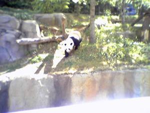 panda_atl_zoo